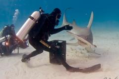 sharks-photos-pat-ford (43).jpg