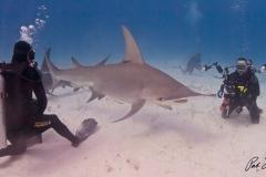 sharks-photos-pat-ford (44).jpg