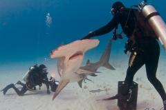 sharks-photos-pat-ford (45).jpg