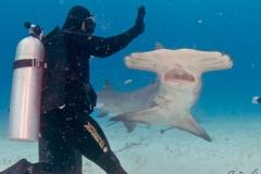 sharks-photos-pat-ford (46).jpg