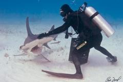 sharks-photos-pat-ford (47).jpg