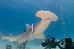 sharks-photos-pat-ford (6).jpg