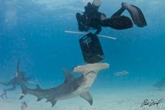 sharks-photos-pat-ford (8).jpg