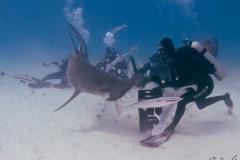 sharks-photos-pat-ford (9).jpg